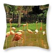 Flamingos Wading Throw Pillow