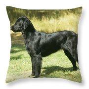 Flat-coated Retriever Dog Throw Pillow