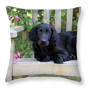 Flat-coated Retriever Puppy Throw Pillow