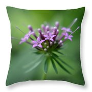 Flattering Compliments Throw Pillow