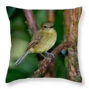 Flavescent Flycatcher Throw Pillow