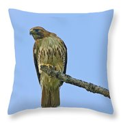 Fledged Red Tailed Hawk Throw Pillow