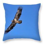 Fledgling Bald Eagle 5048 Throw Pillow