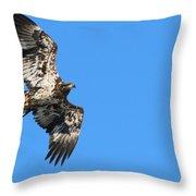 Fledgling Bald Eagle 5078 Throw Pillow