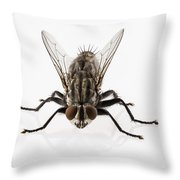 Flesh Fly Isolated Throw Pillow