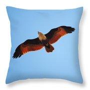 Flight Of Eagle Throw Pillow