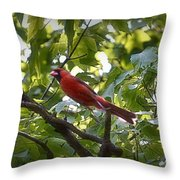 Flight Of The Cardinal Throw Pillow