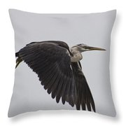 Flight Of The White Necked Heron Throw Pillow