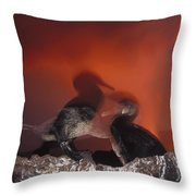 Flightless Cormorants And Volcanic Throw Pillow
