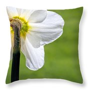 Flipside Of A Daffodil Throw Pillow