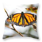 Flirting Monarch Throw Pillow