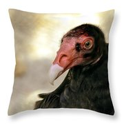 Flirting Turkey Buzzard  Throw Pillow