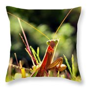 Flirty Mantis Throw Pillow
