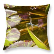 Flittering Dragonfly Throw Pillow