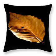 Floating Freely Throw Pillow by Stephen Melcher