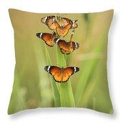 Flock Of Plain Tiger Danaus Chrysippus Throw Pillow