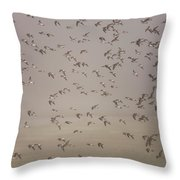 Flock Of Plovers Throw Pillow