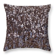 Flooded Cotton Fields Throw Pillow