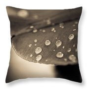 Floral Close-up Iv Throw Pillow by Marco Oliveira