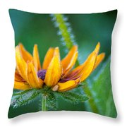 Floral Fuzz Throw Pillow