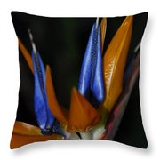 Floral Points Throw Pillow