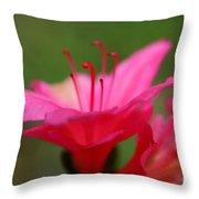 Floral Rosa Throw Pillow