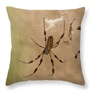 Florida Banana Spider Throw Pillow