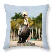 Florida Brown Pelican Throw Pillow
