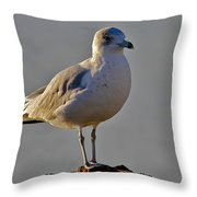 Florida Gull Throw Pillow