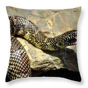 Florida King Snake Lampropeltis Getula Floridana Usa Throw Pillow