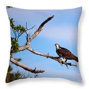 Florida Osprey Having Breakfast Throw Pillow