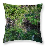 Florida River Throw Pillow