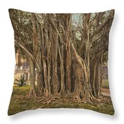 Florida Rubber Tree, C1900 Throw Pillow