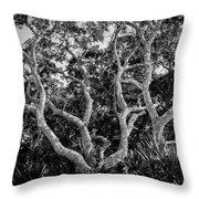 Florida Scrub Oaks Bw   Throw Pillow
