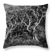 Florida Scrub Oaks Painted Bw  Throw Pillow