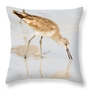 Florida Shorebirds - Willets In Their Summer Finery Throw Pillow