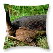 Florida Softshell Turtle Apalone Ferox Throw Pillow