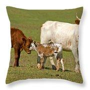 Florida Spanish Cattle Throw Pillow