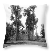 Florida Spanish Moss Throw Pillow