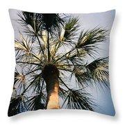 Florida Trees Throw Pillow
