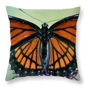 Florida Viceroy Throw Pillow