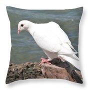 Florida White Pigeon Throw Pillow