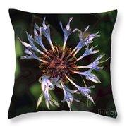 10415 Cornflower Throw Pillow