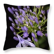 Flower- Agapanthus-blue-buds-one-flower Throw Pillow
