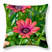 Flower Astra Outback Purple Art Prints Throw Pillow