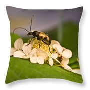 Flower Beetle Throw Pillow