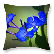Flower Burst Throw Pillow