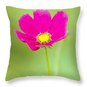 Flower - Closeup Throw Pillow