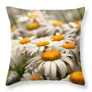 Flower - Daisy - Not Quite Fresh As A Daisy Throw Pillow