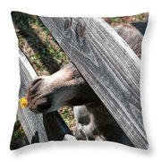 Flower For The Miniature Donkey Throw Pillow